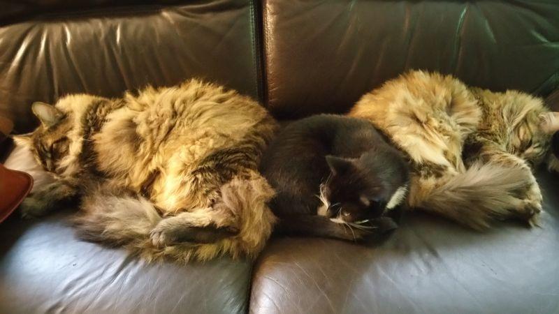koty-w-komplecie-autor-bolek-wojcik-1